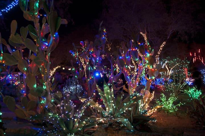 ethel-m-chocolate-factorys-holiday-cactus-garden